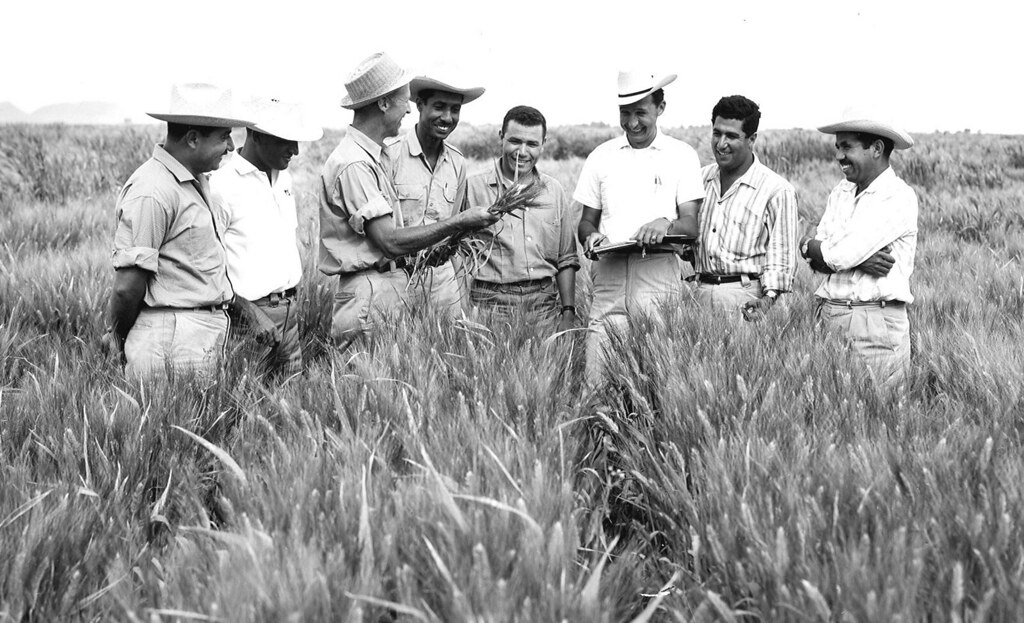 Dr. Norman Borlaug seen standing in Mexican wheat field with a group of biologists